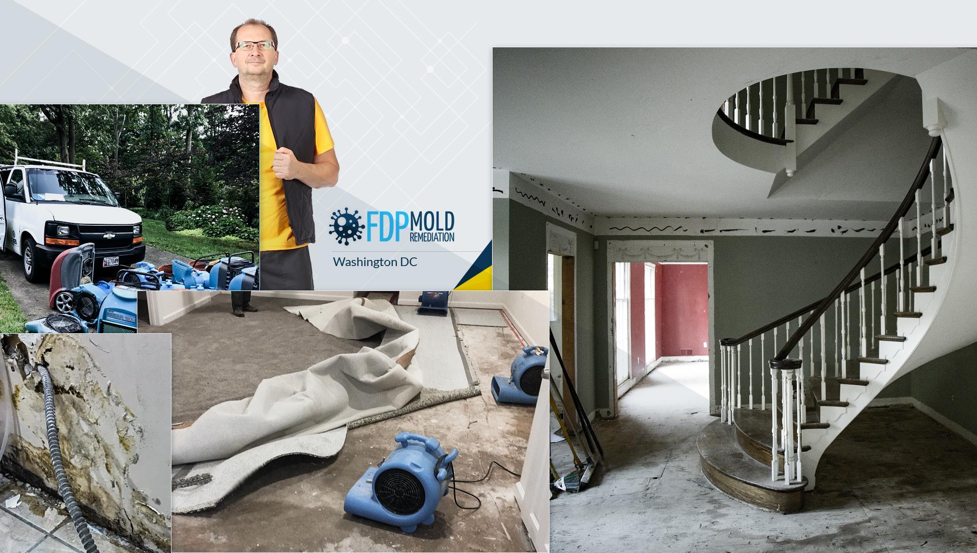 Fdp Mold Remediation In Washington Dc